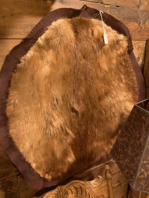 Beaver Pelt Taxidermy.